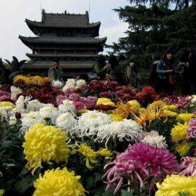 Цветы — символы разных стран
